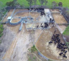 Cattle Yards- Condingup