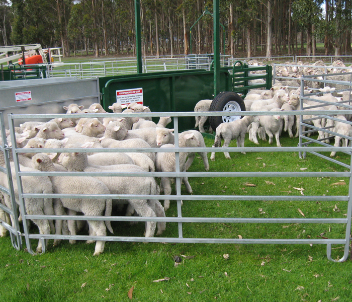 Mobile Sheep Yards- Single Axle