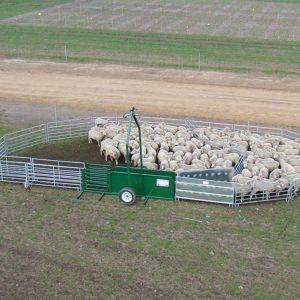 Australian Made Portable Sheep yard Custom Setup