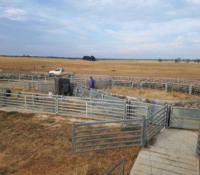 Permanent Sheepyards- Kaniva, Vic