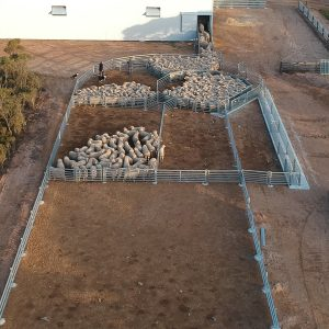 Permanent sheep yards