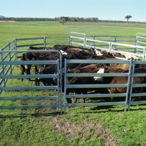 Semi Permanent Cattle Yards